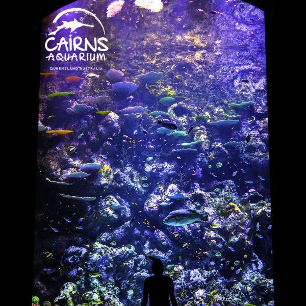 Cairns Aquarium Queensland Australia Beleuchtet von Orphek