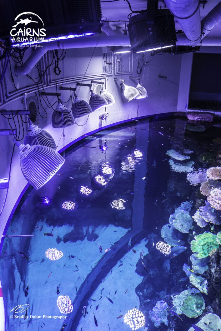 Orphek-LED-lighting-deep-reef