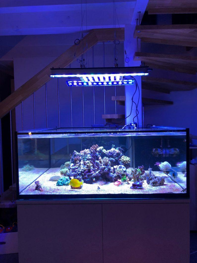 Reef_led_quarium_lighting_switzerland