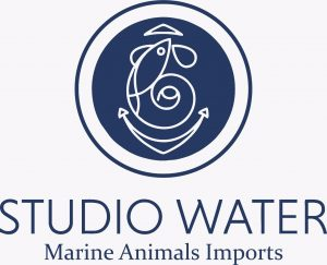 STUDIO WATER MARINE ANIMALS