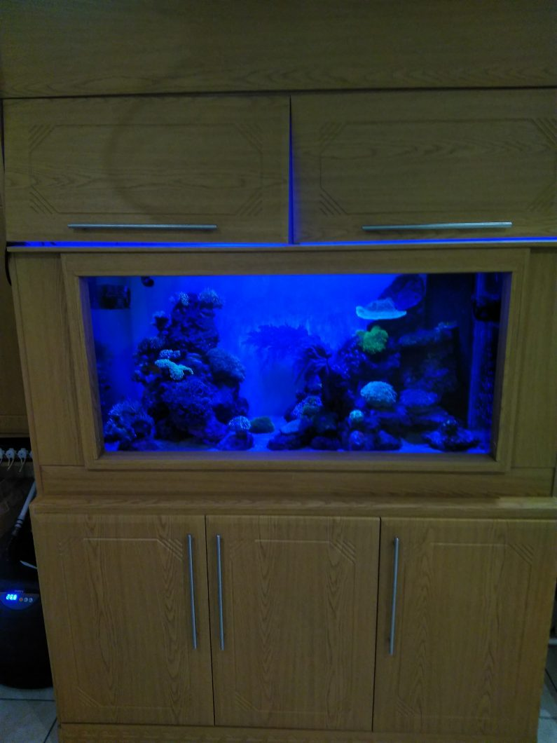 blauw-LED-aquarium-light