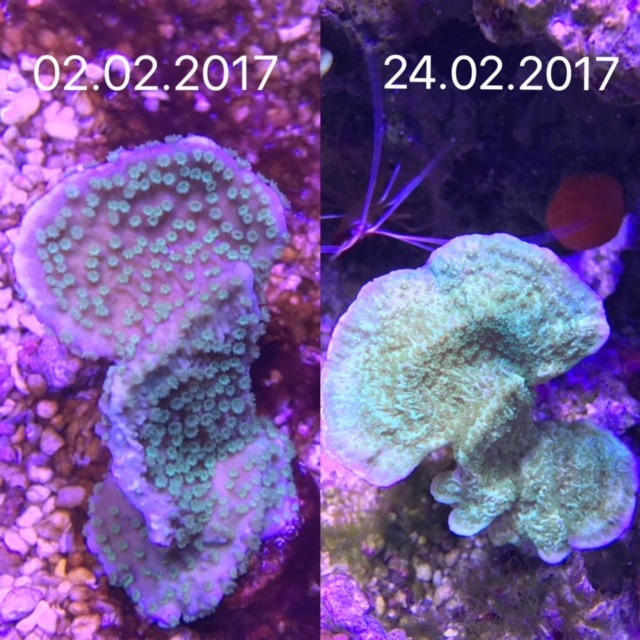 fast_coral_growth