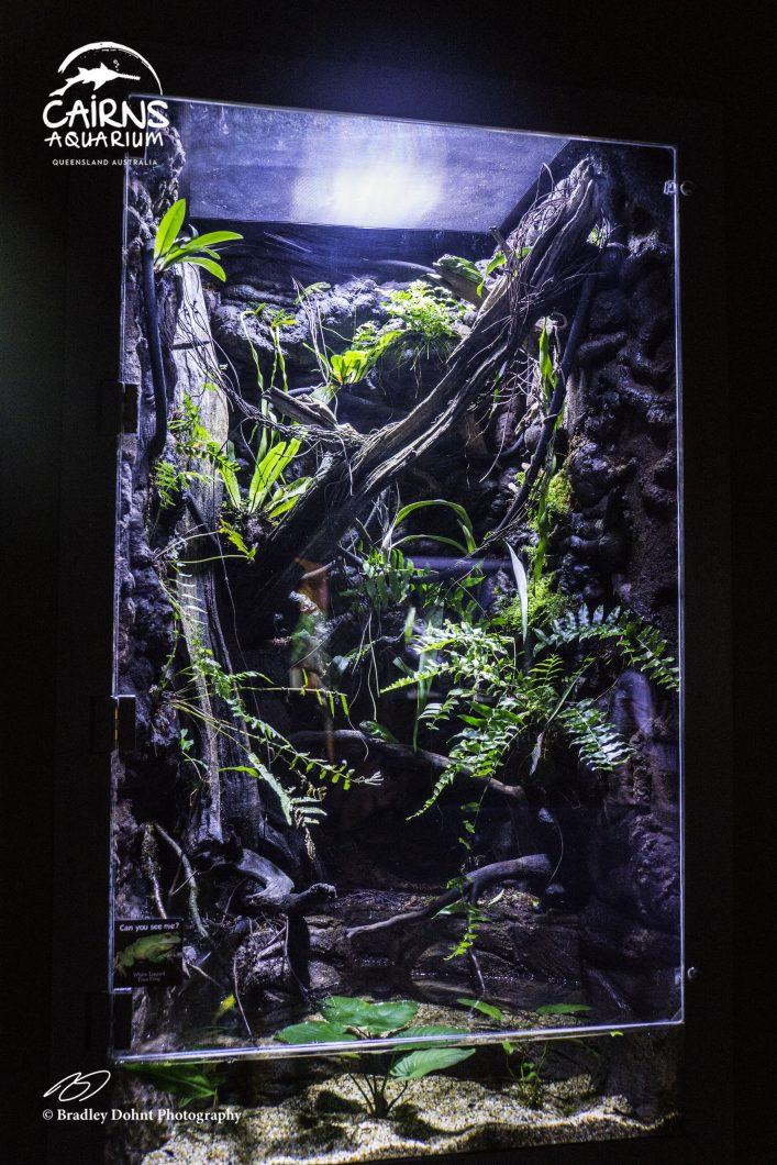 terrarium- aquarium-LED-lighting