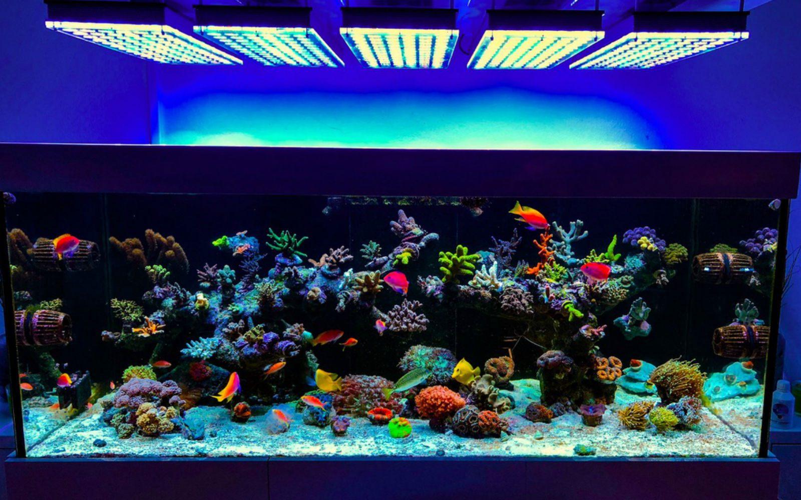 słonowodne oświetlenie morskie rafa koralowa akwarium
