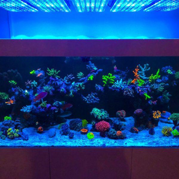 Reef2Reef Orphek Atlantik LED آکواریوم نورپردازی عکس