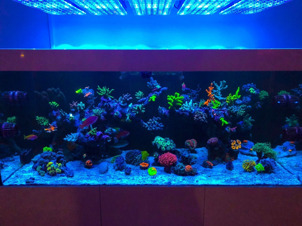 Acquario di illuminazione a led u orphek dell acquario di