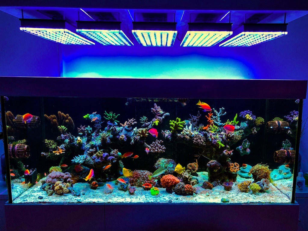 saltwater coral marine reef aquarium led lighting