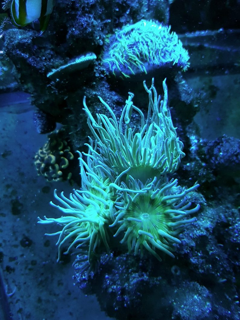 OR Bar LED light corals pop00005