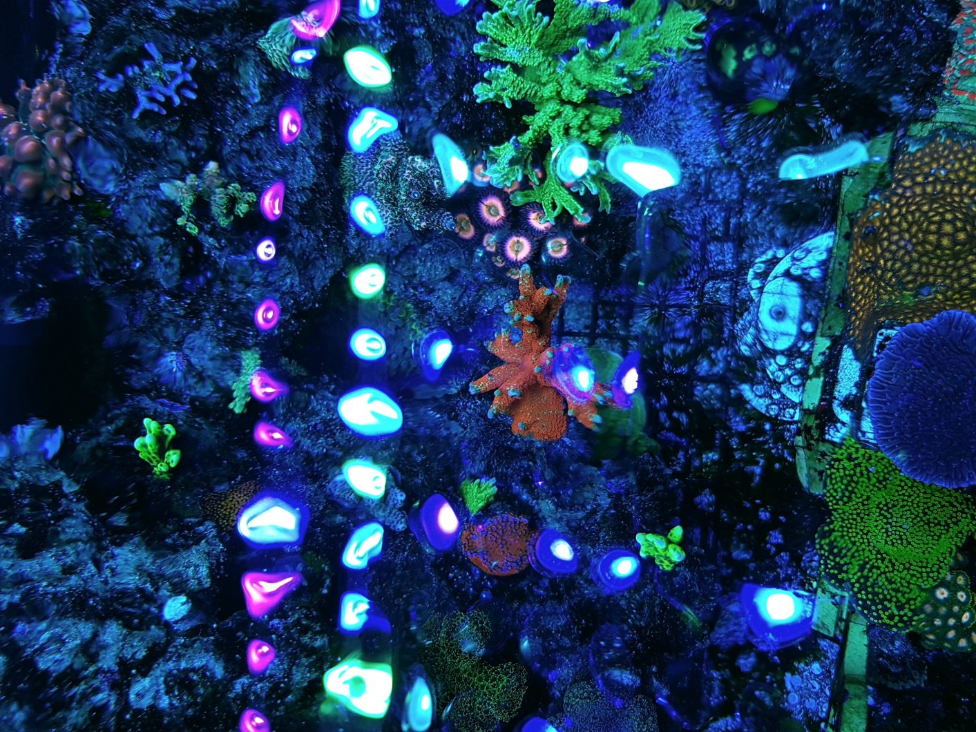ATAU Bar LED light coral pop00011