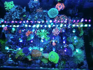 OR Bar LED light corals pop00017