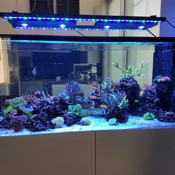 Orphek OR 120 Reef Bar LED hellblau Himmel Spektrum