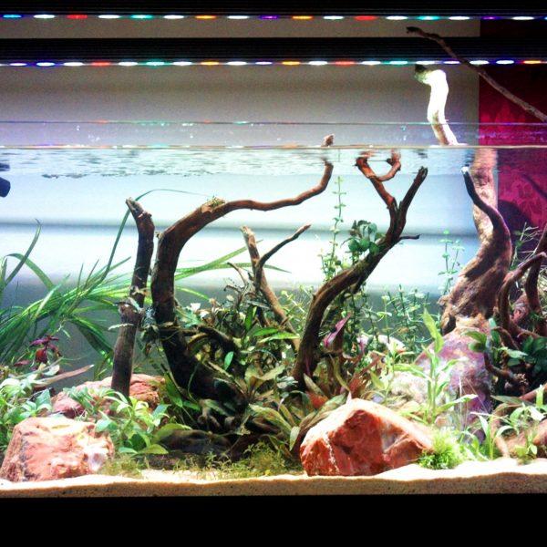 ODER 120 Bar LED Light - Süßwasser gepflanzt