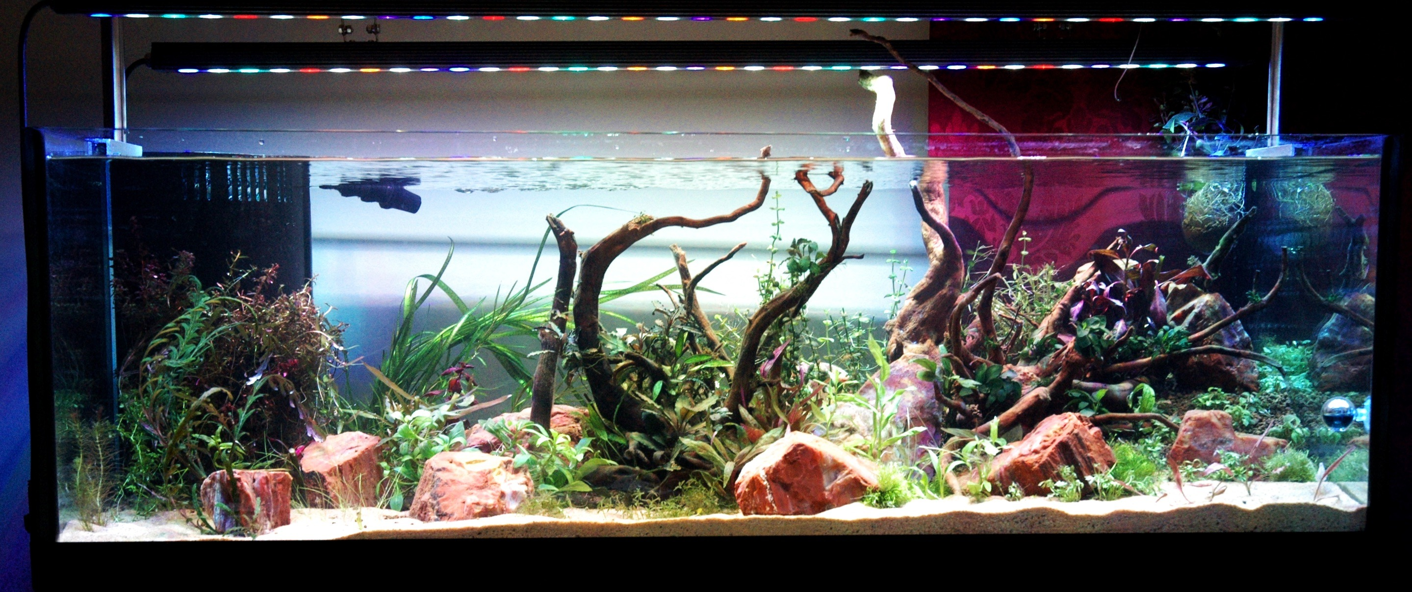ferskvand akvarium med OR bar LED lys
