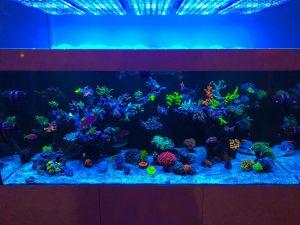 saltwater aquarium LED lighting
