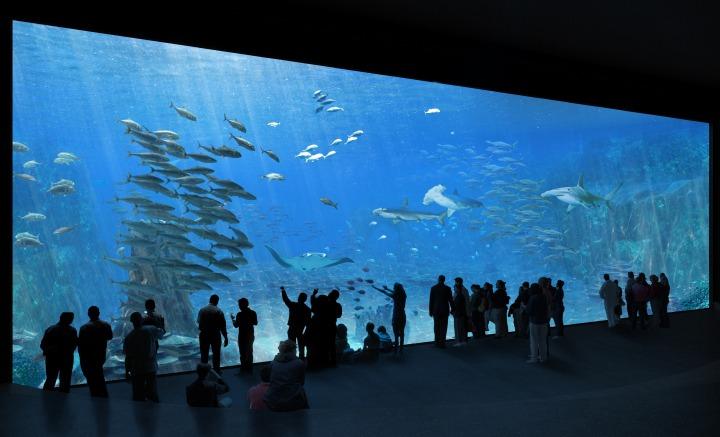 Orphek-public-aquarium