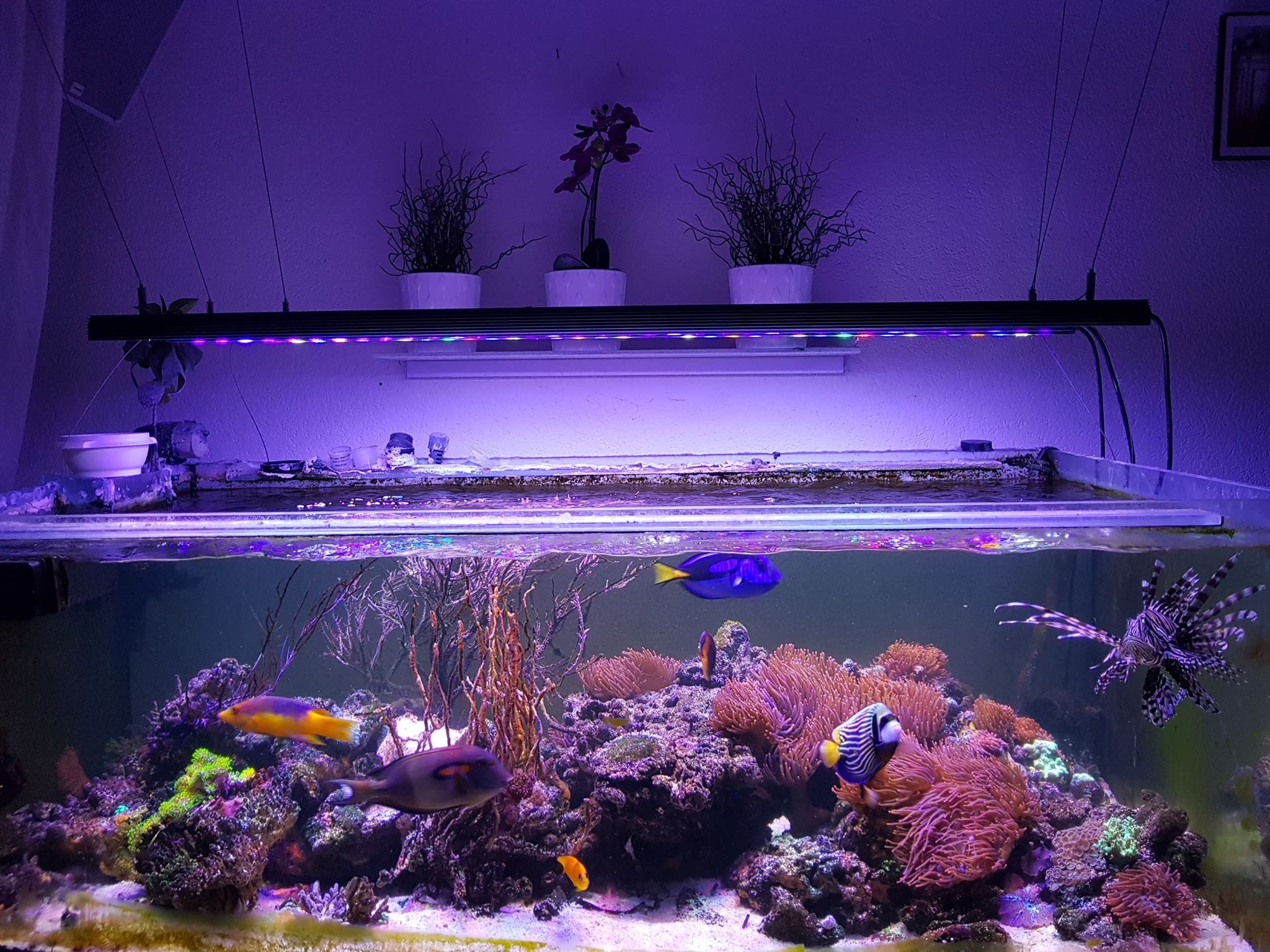 Orphek Bar led full aquarium shot