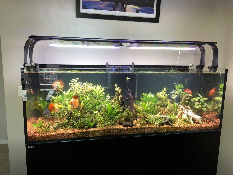 discus-planted-aquarium -light