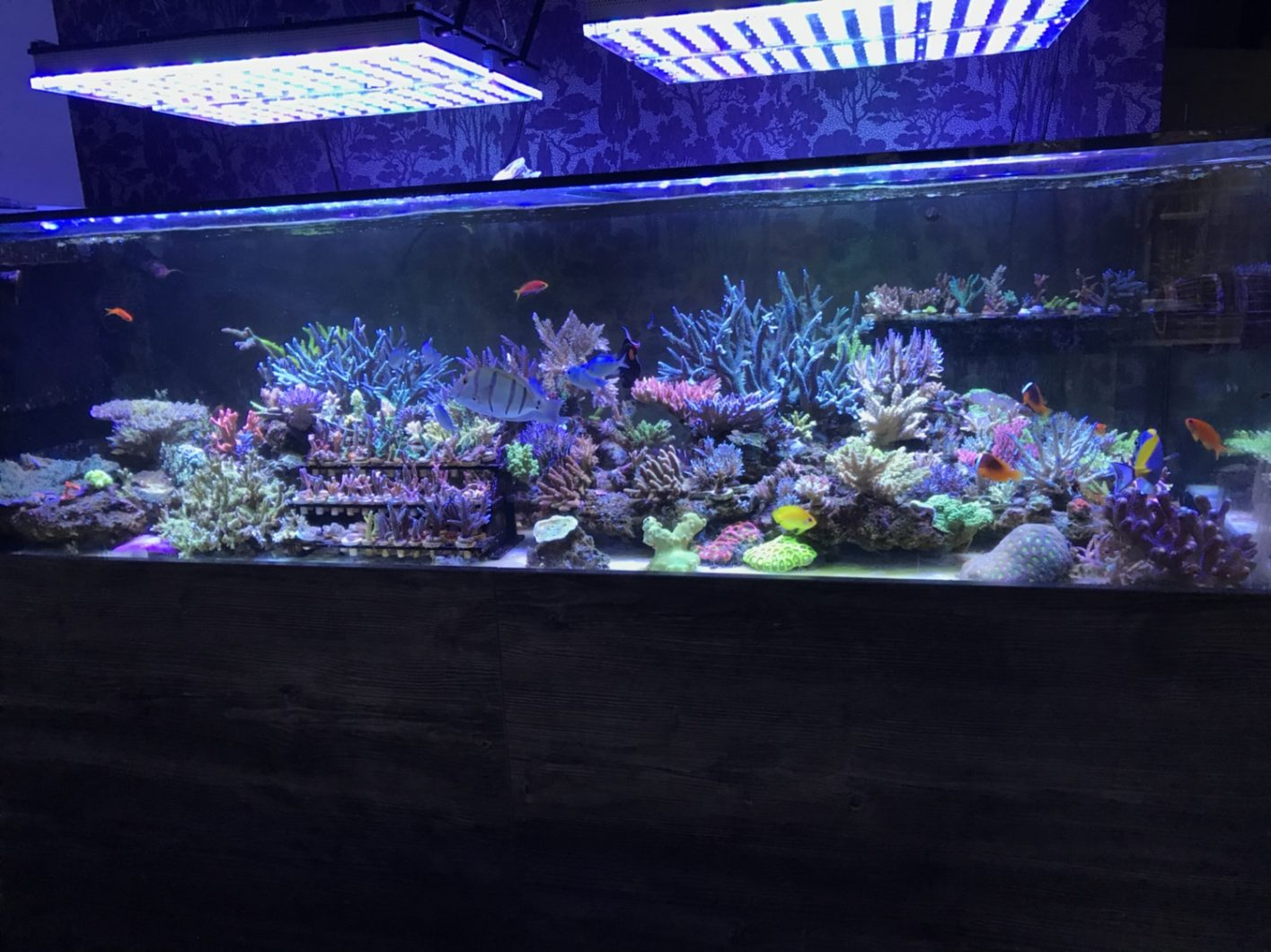 sps LED aquarium lighting