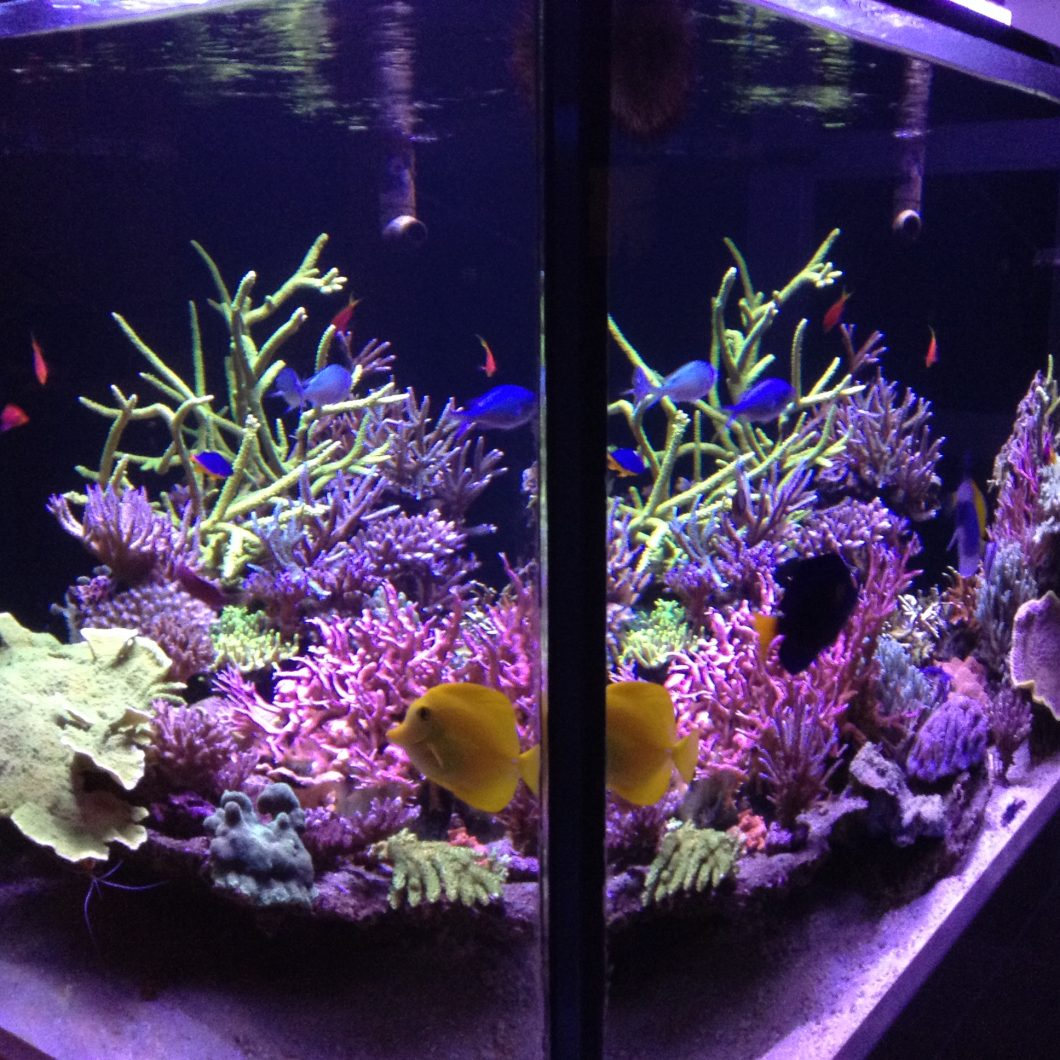Best_LED_aquarium_light_better_color_0195