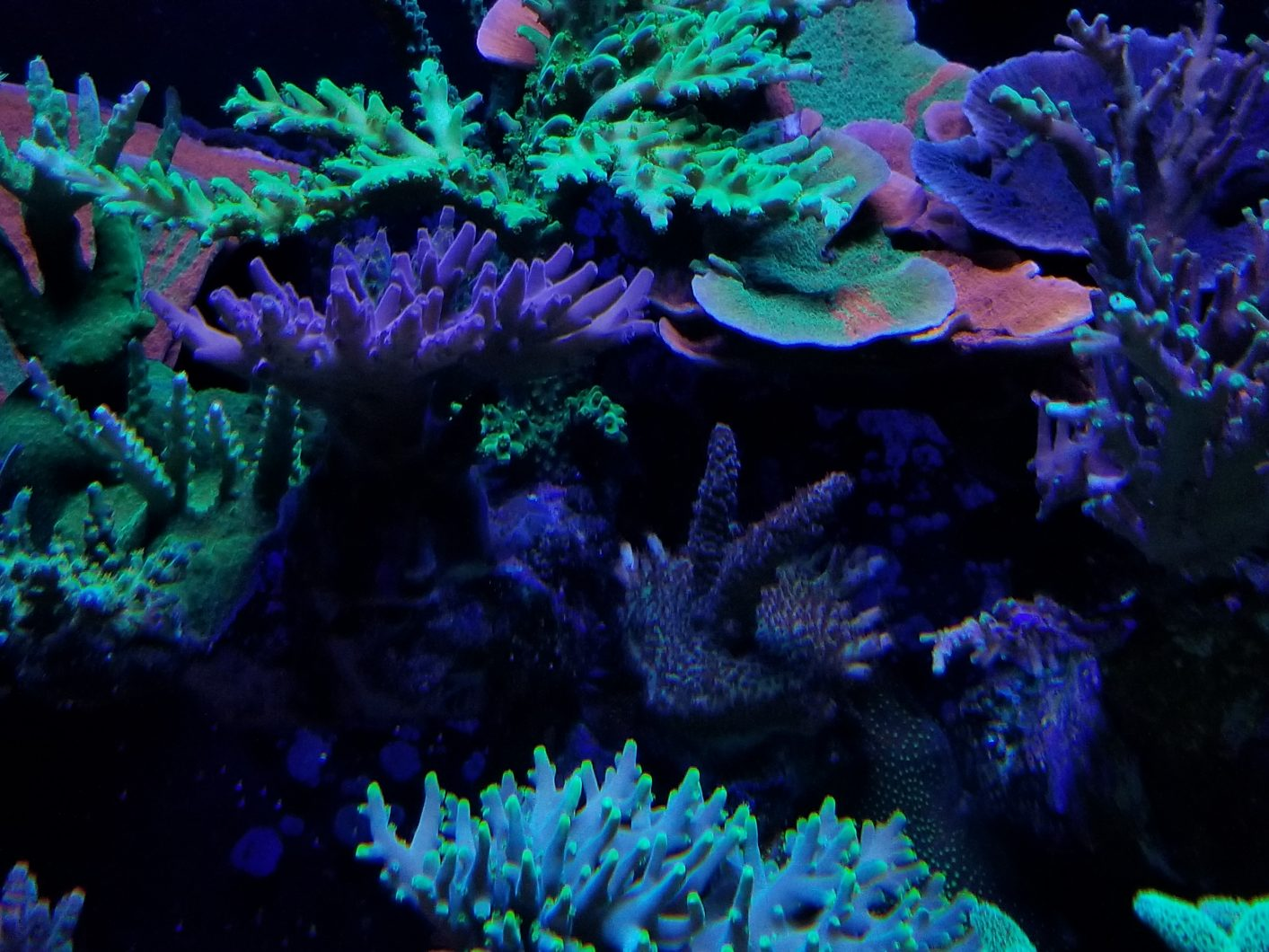 Best_reef_LED_aquarium