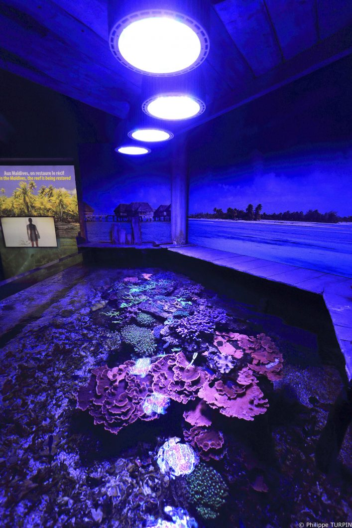 Coral-tank-Orphek-LED-lighting