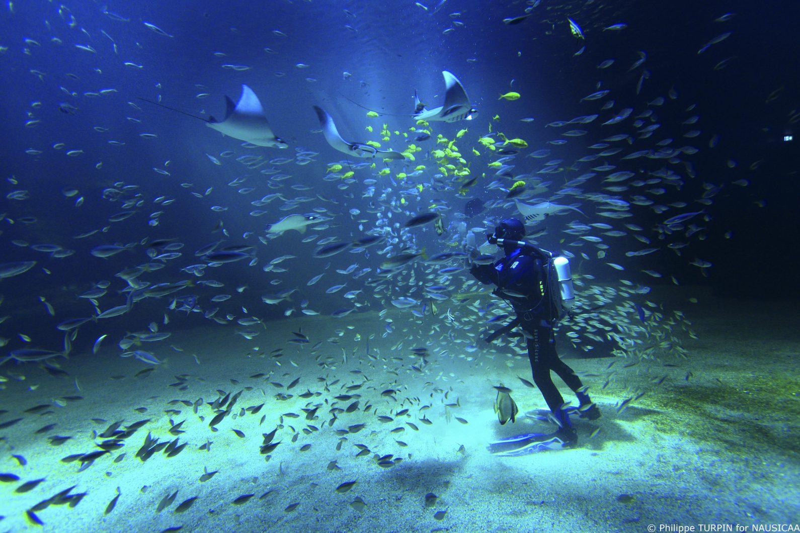 Diver with Revo-Nausicca