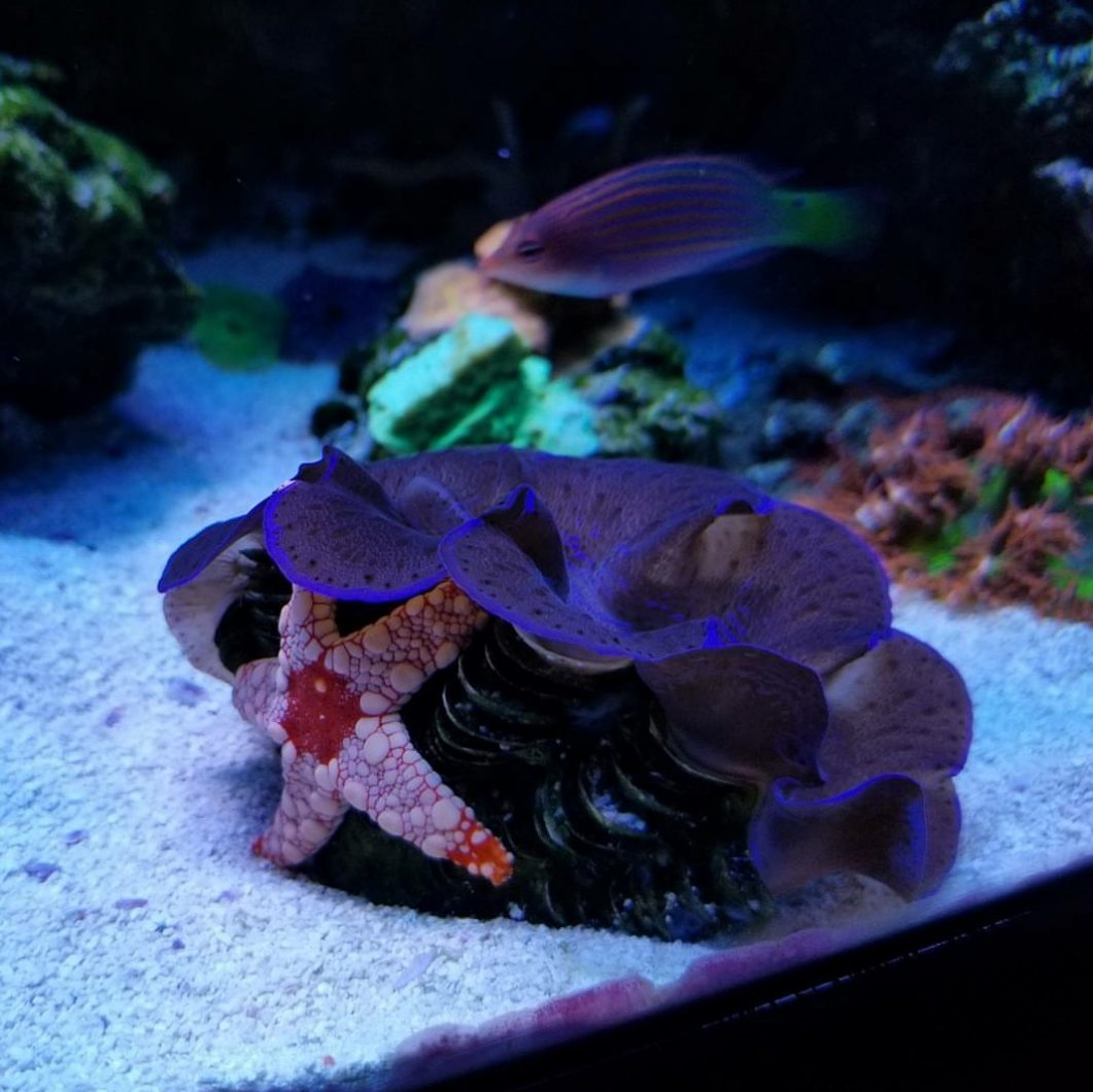 amazing_reef_aquarium