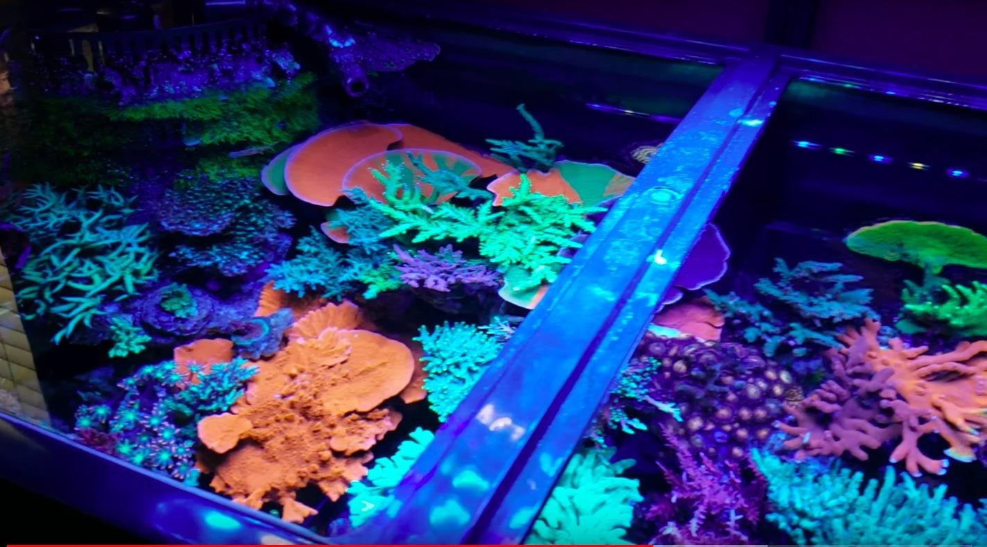 melhores luzes LED de aquário de coral