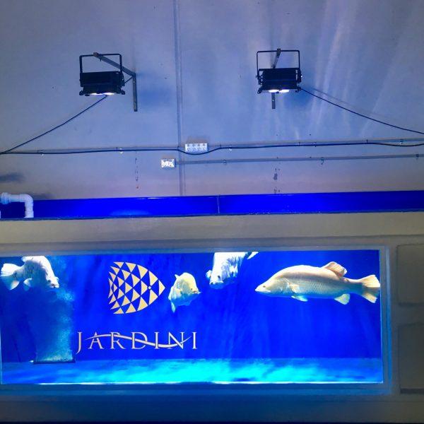 Orphek آمازوناس 320 نور نادر زیبا استرالیا ماهی های آب شیرین