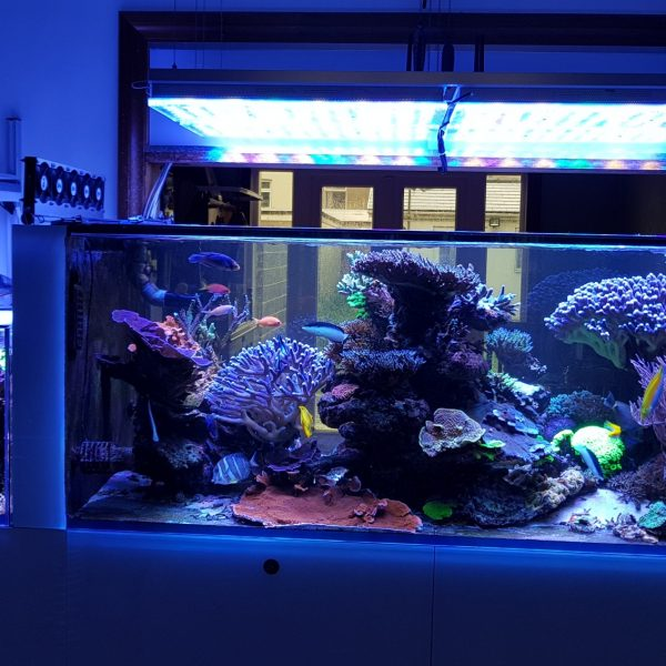 UK Client Upgrades to Atlantik V4 and his reef looks amazing