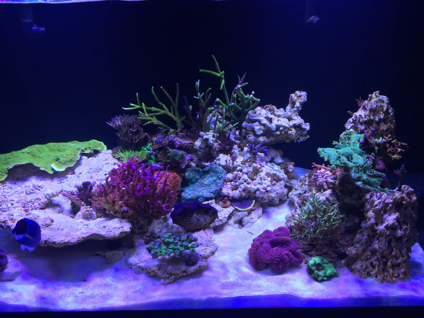 reef-aquarium-Orphek-LED-1103