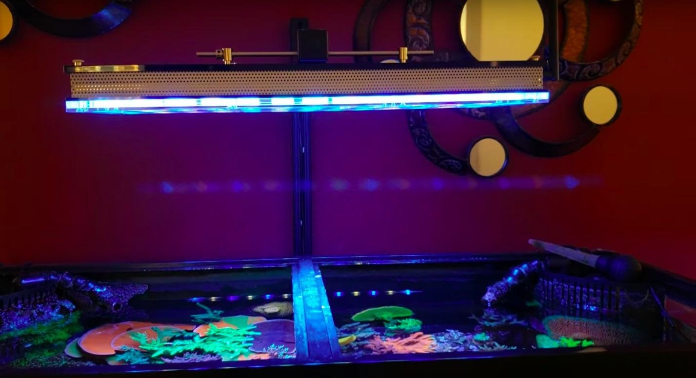 corais do aquário do recife