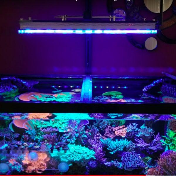 Огляд Чому Orphek Atlantik V4 є кращим світлодіодним освітленням акваріума рифів