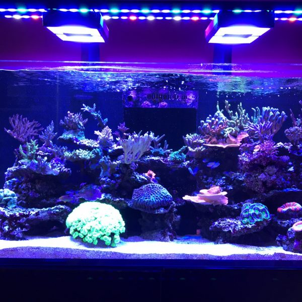 Tuotearvostelu OR120 Reef Daylight & Blue-Sky