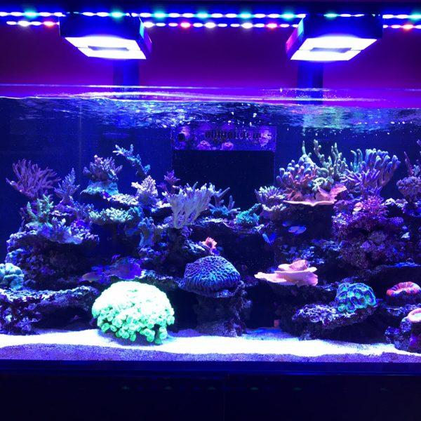 Critique du produit OR120 Reef Daylight & Blue-Sky