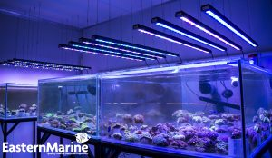 Orphek OR 120 Bar LED leuchtet alle EasternMarine Aquarien