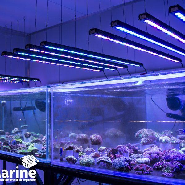 ਆਰਫਿਕ ਜਾਂ ਐਕਸਗੇਂਸ ਬਾਰ LED ਲਾਈਟਸ ਸਾਰੇ ਪੂਰਬੀ ਮਾਰਰੀਨ ਐਕੁਆਰੀਆਂ
