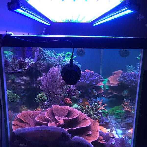 Orphek Reef OR 120 آبی آسمان چراغ نور LED با ATI T5