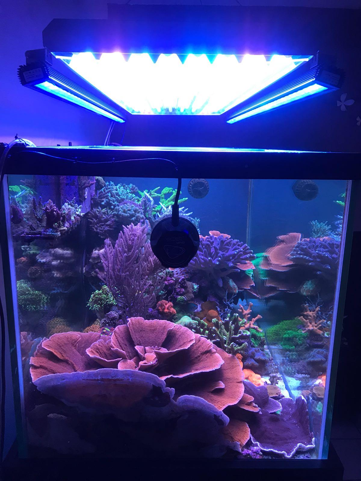 orphek reef or 120 blauwe hemelbalk led verlichting met ati t5