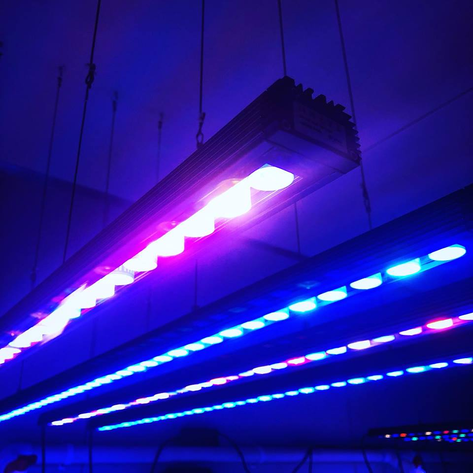 Orphek_bar_led_lighting