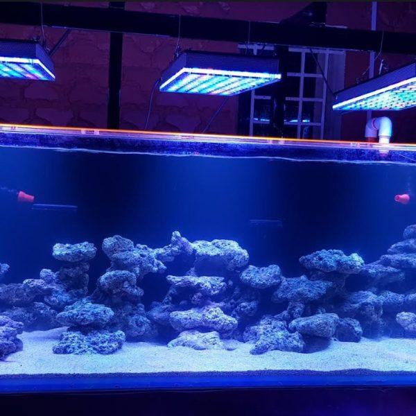 Éclairage LED aquarium de récif d'eau de mer Inde