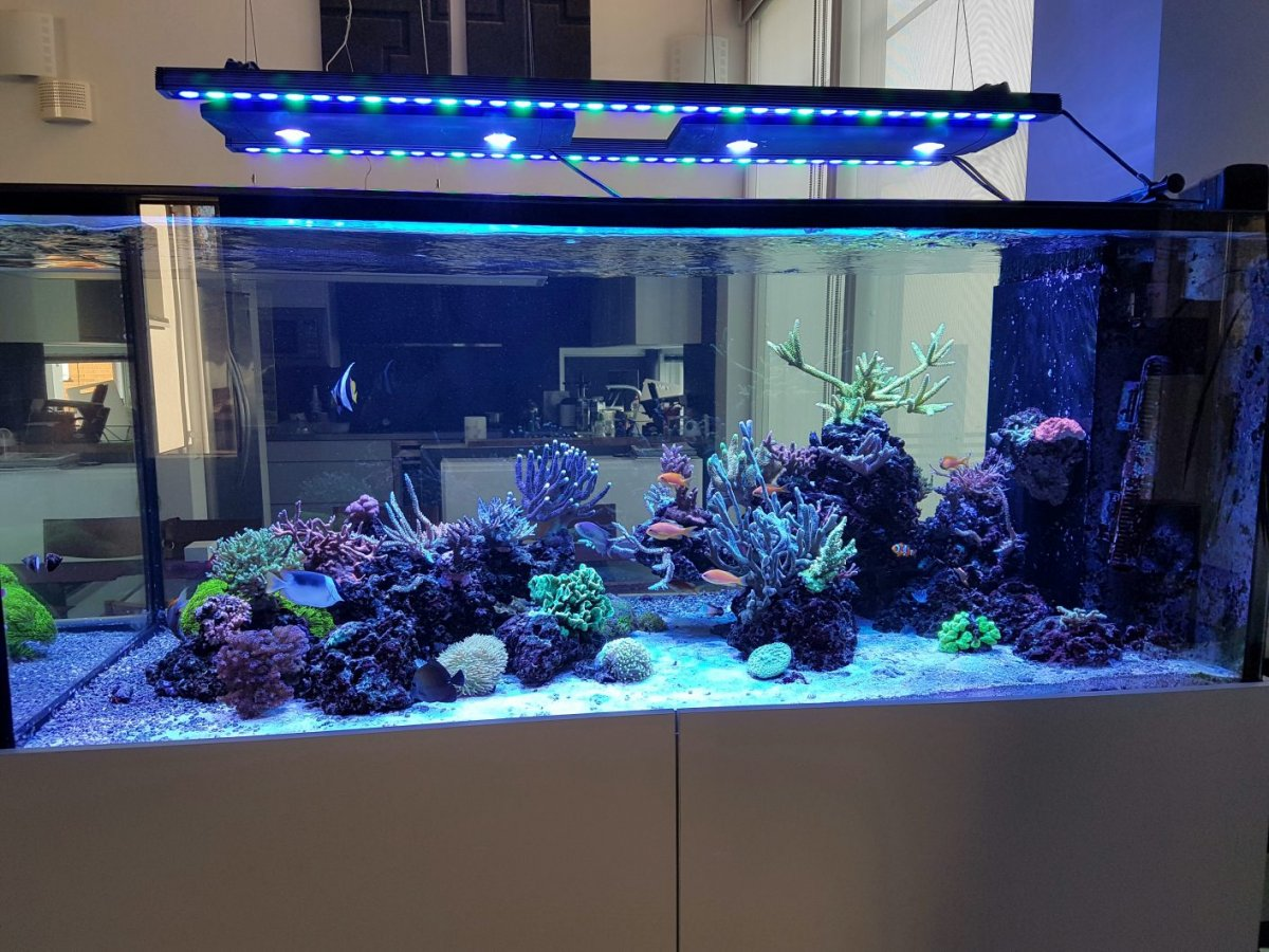 Orphek-Bar-Aquarium-LED- 조명 - 하늘색
