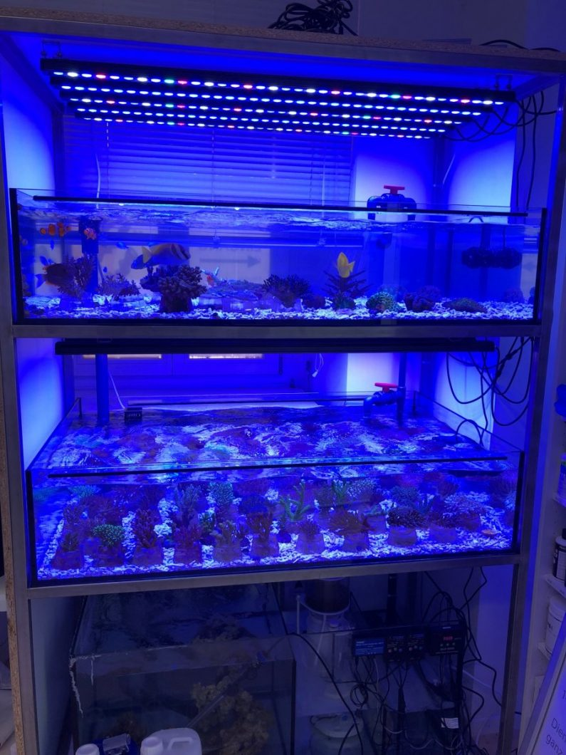 Orphek - Bar-Leds-for-Reef-frags