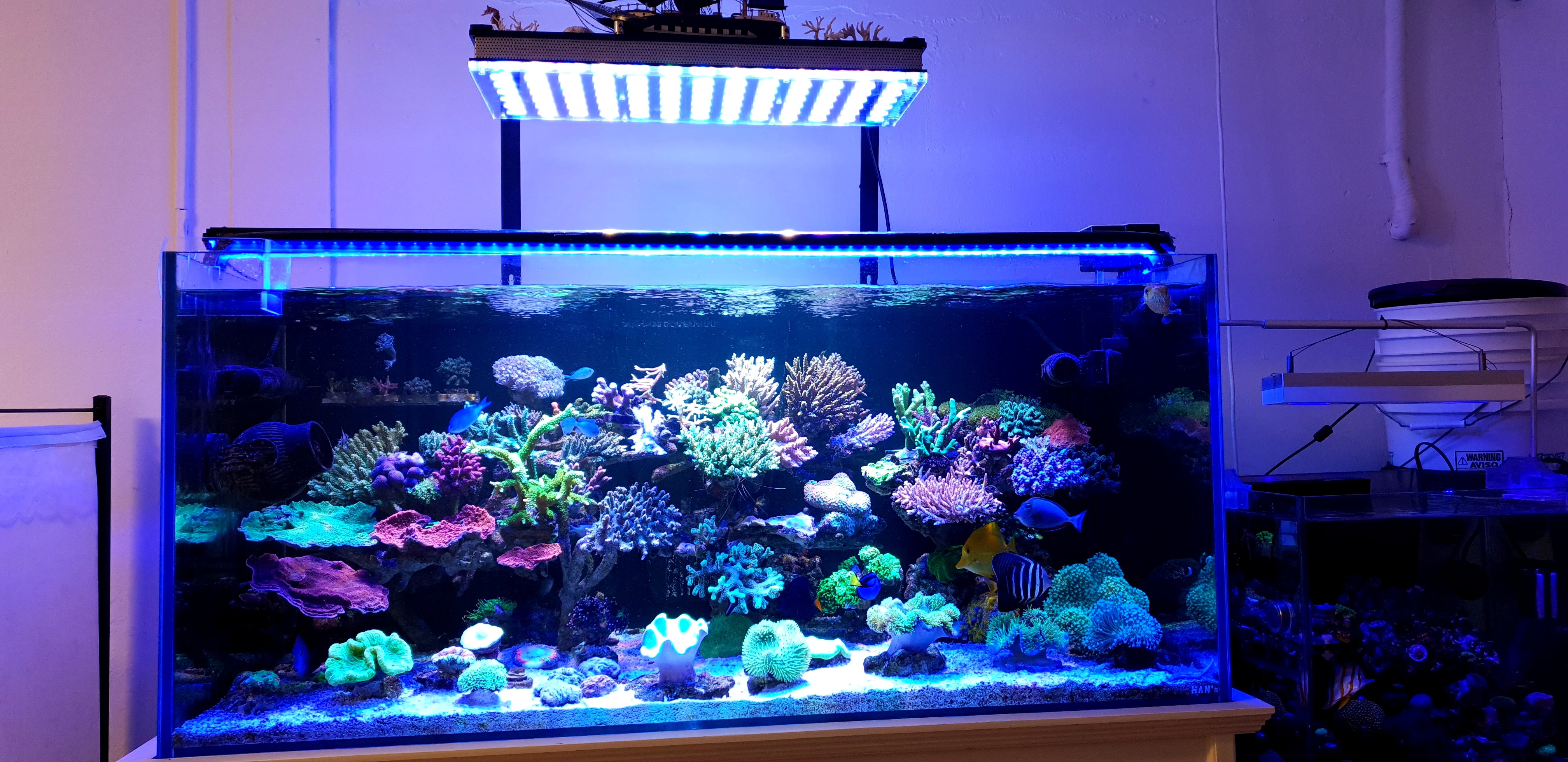 20 Reef Aquarium Photos With Orphek Or Bar Led Aquarium Led