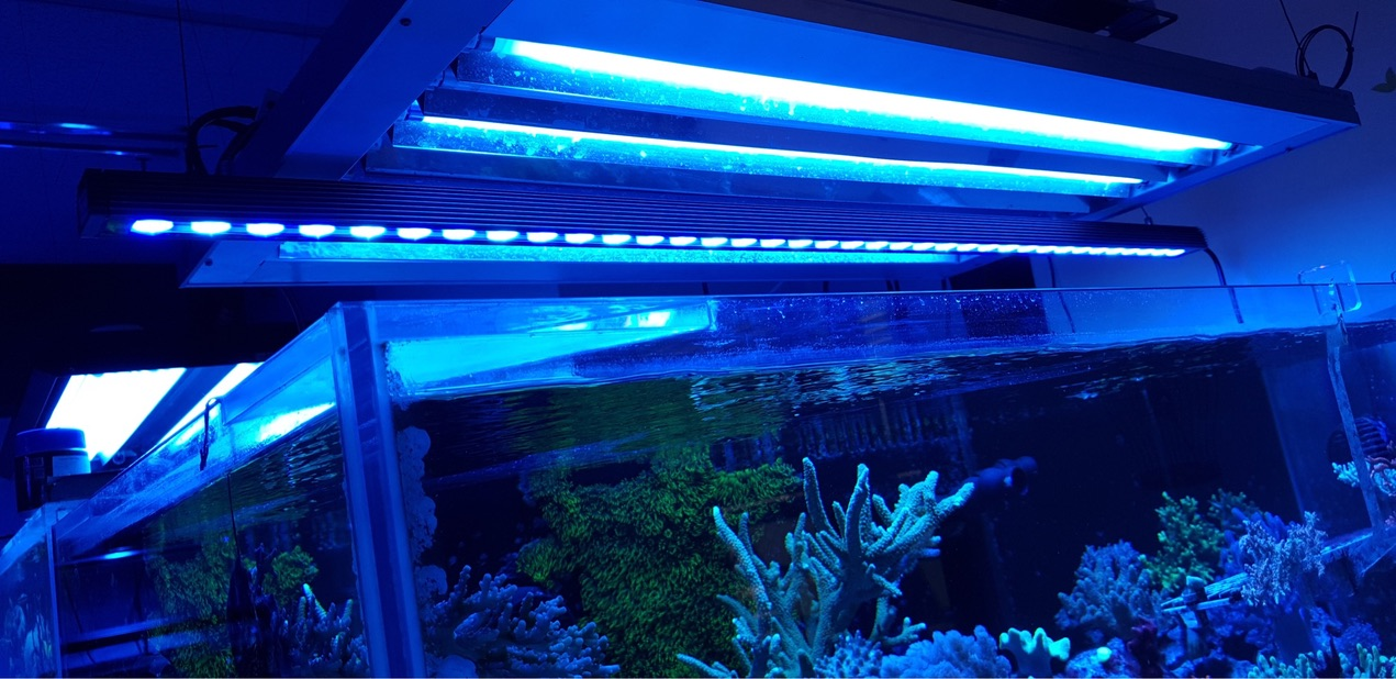 Or_bar_LED_Aquarium_reef