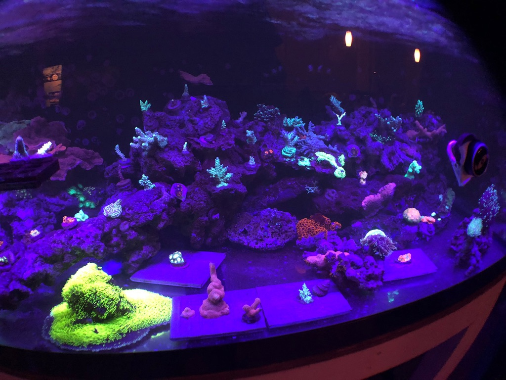 UV_violet_coral_bar_led