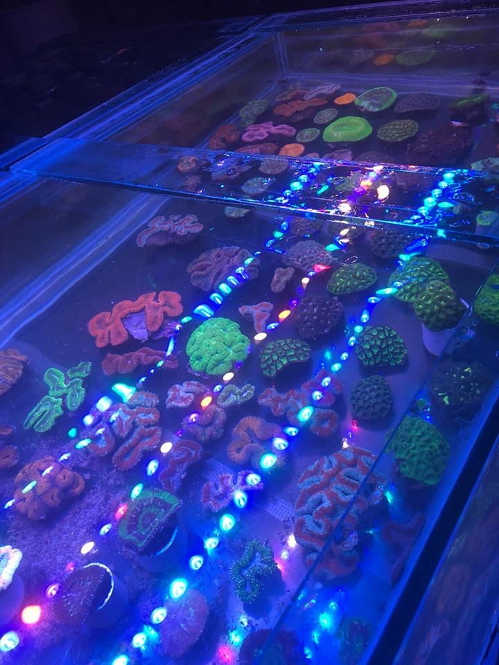 frag_aquarium_Bar_led