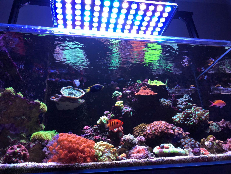 Lighting the Reef Aquarium