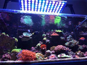 サンゴ礁水族館の照明