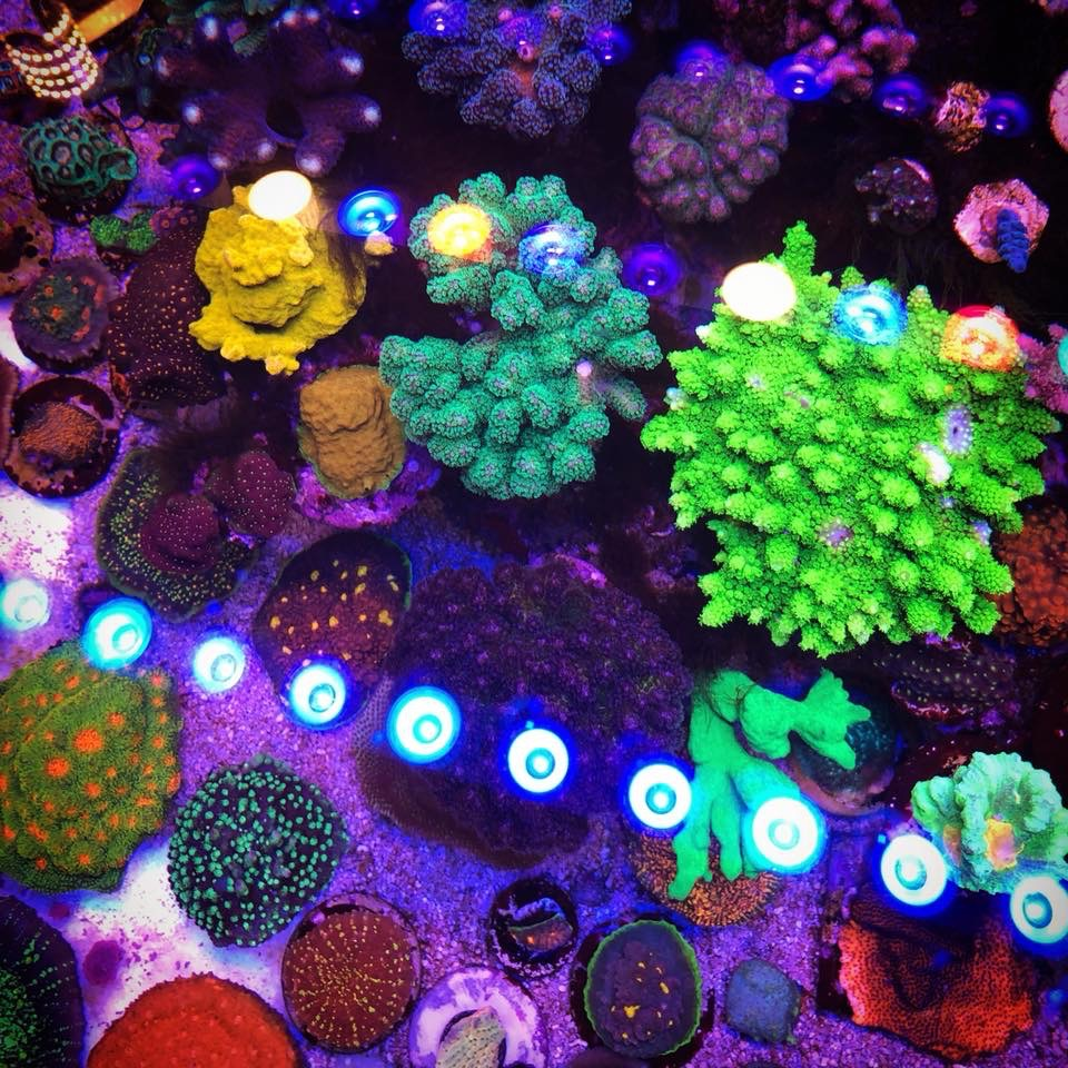 20 Reef Aquarium Photos dengan Orphek OR Bar LED